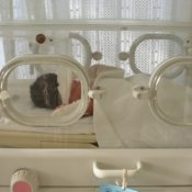 matt in incubator- to use